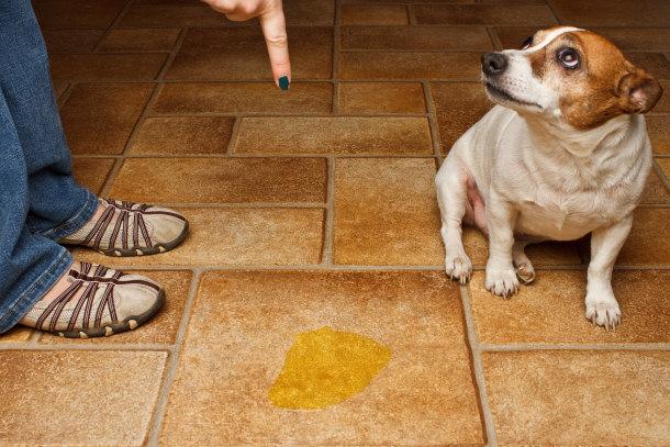 Hasil gambar untuk separation anxiety dog