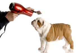 Caring For An English Bulldog Tips And Basic Info