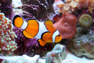 How to Convert a Freshwater Tank to Saltwater