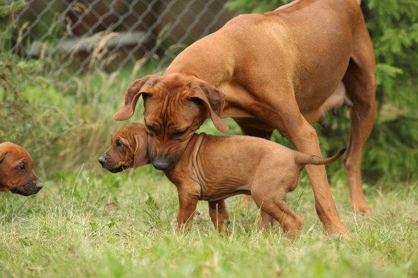 Petangocom Online Pet Adoption amp More Welcome a homeless