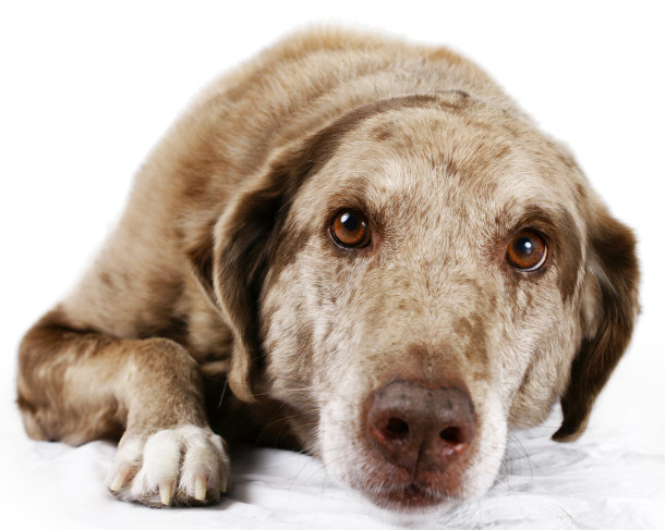 How Old Can Mutt Dogs Live