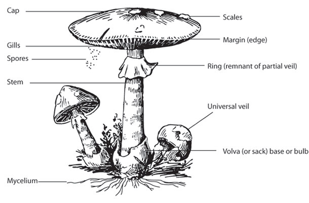 15 fascinating facts about mushrooms