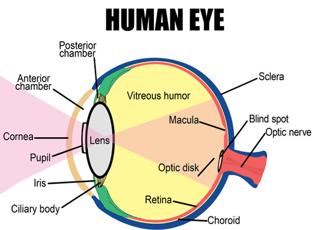 Top 15 Amazing Facts About Your Eyes