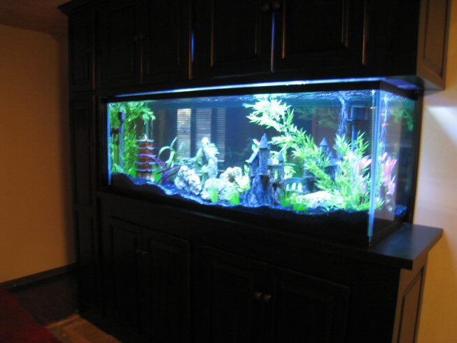 180 gallon aquarium for sale thread 4 21 07 180 gallon