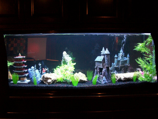 My 180 Gallon In Wall Aquarium Made From Starphire Glass