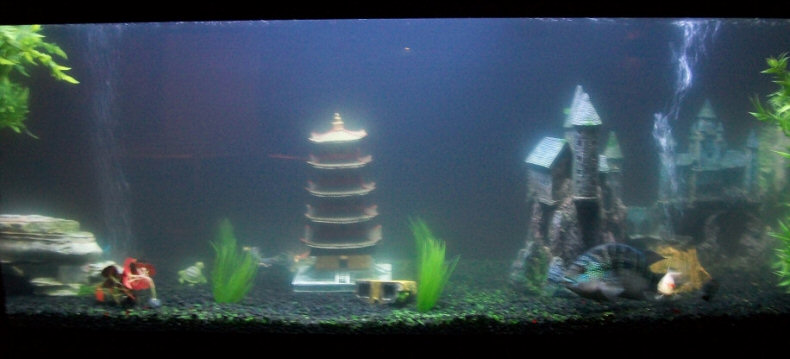 My 180 gallon in wall aquarium made from starphire glass for My fish tank water is cloudy