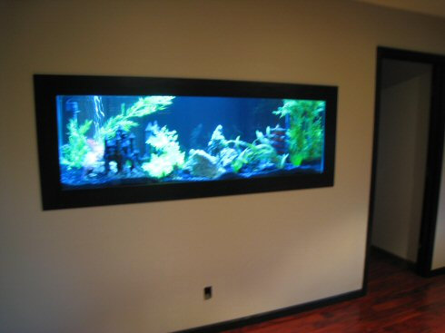 Amazing In-Wall Fish Tank