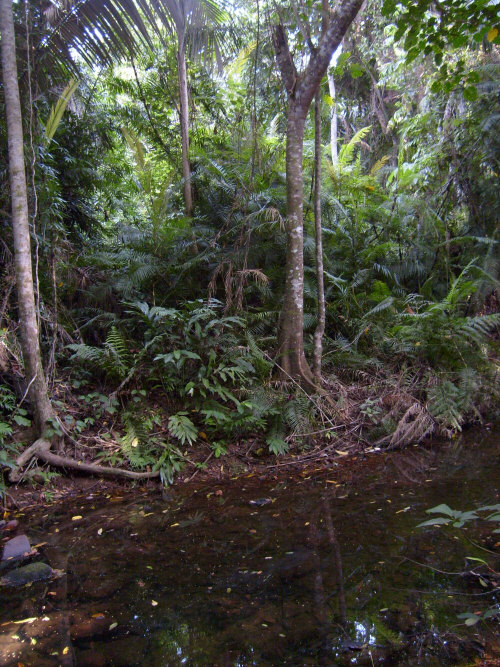 15 Fascinating Facts About The Amazon Rainforest