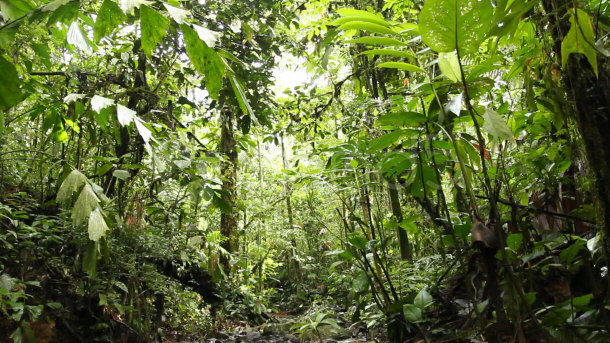 Due to the lack of light in the understory small plants use ingenious methods that have been developed through evolution in order to stay alive. & 15 Fascinating Facts about the Amazon Rainforest