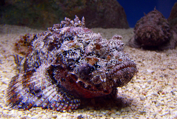 15 wild animals deadly to humans for Fish that looks like a rock