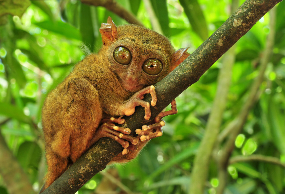 15 Unique Forest Creatures Less Known To Man