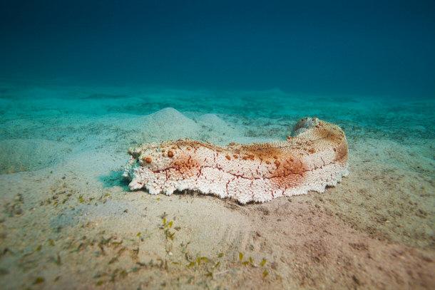 Top 15 creepy deep sea creatures for Another word for ocean floor